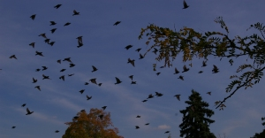 birds_edited-1