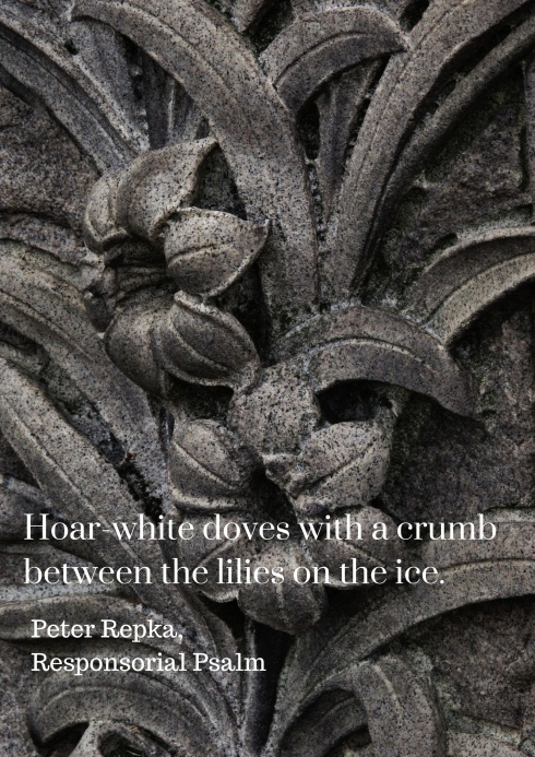 Hoar-white doves with a crumbbetween the